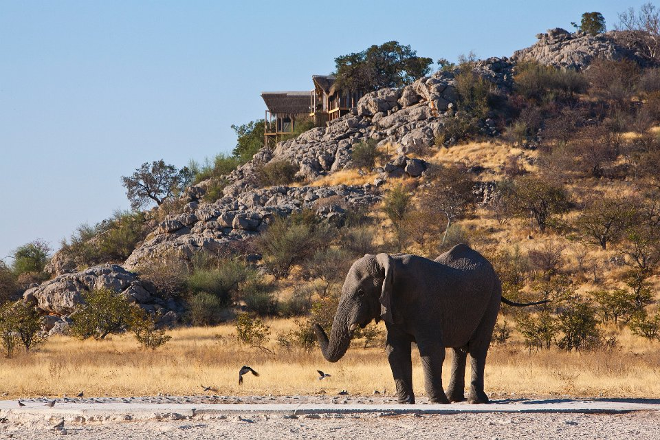 Elephant at Dolomite camp. Photo ©Christopher Clark.