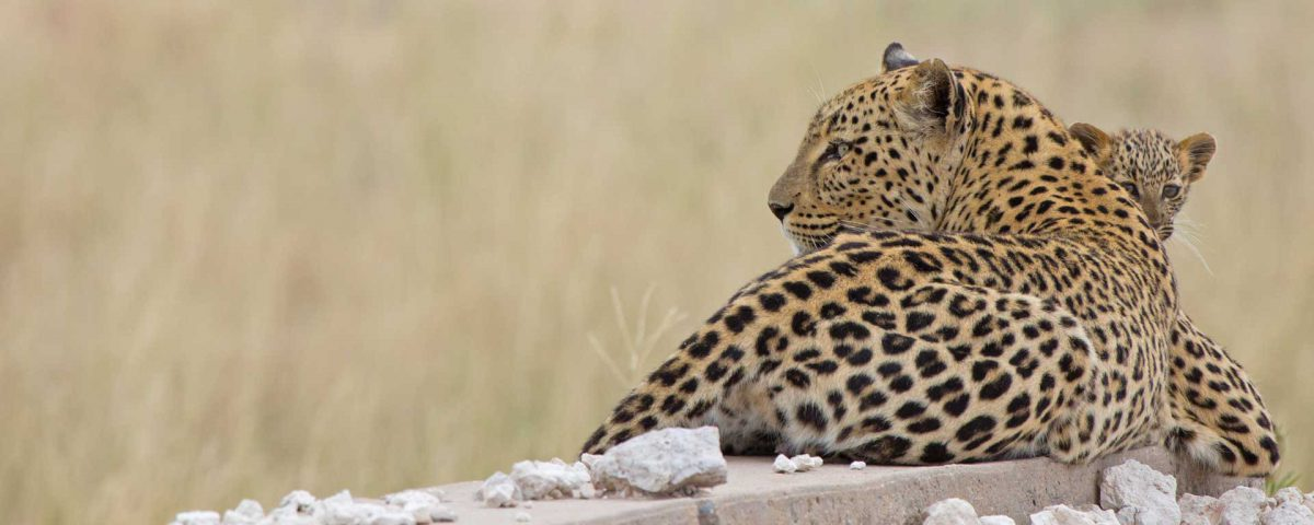 Wild cats to delight and surprise in Etosha - Travel News