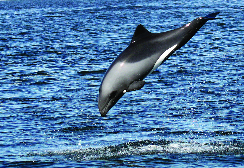 Benguela dolphins - a sure treat for Jostaphine on her marine cruise.