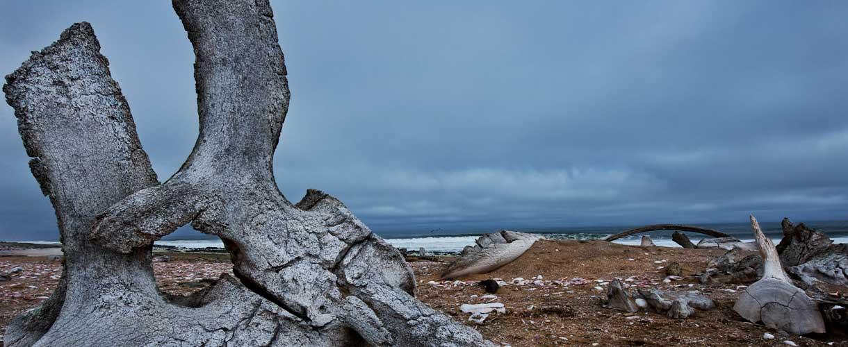 Skeleton Coast Park