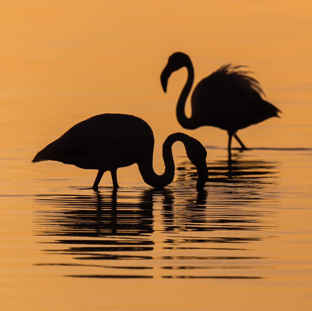 flamingo-sunset