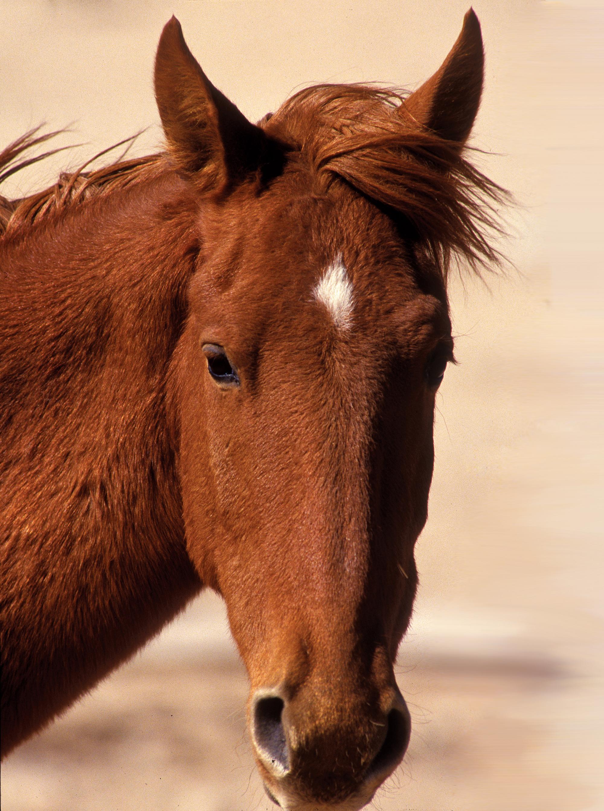 horse-1-pvs-extra