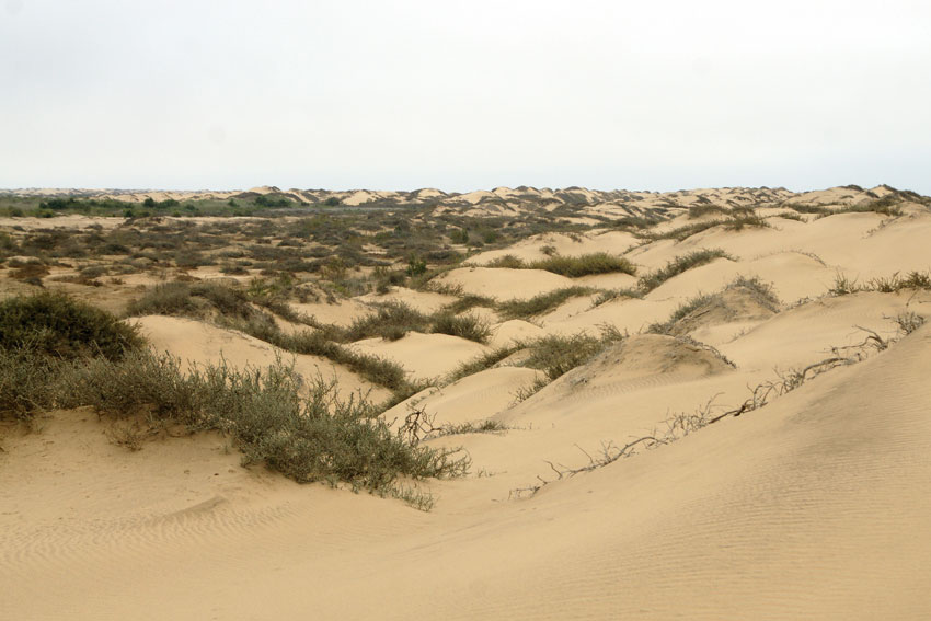 Kuiseb delta hummocks. Photo Joh Henschel