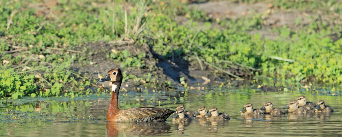 get your ducks in a row birding with pompie travel news namibia