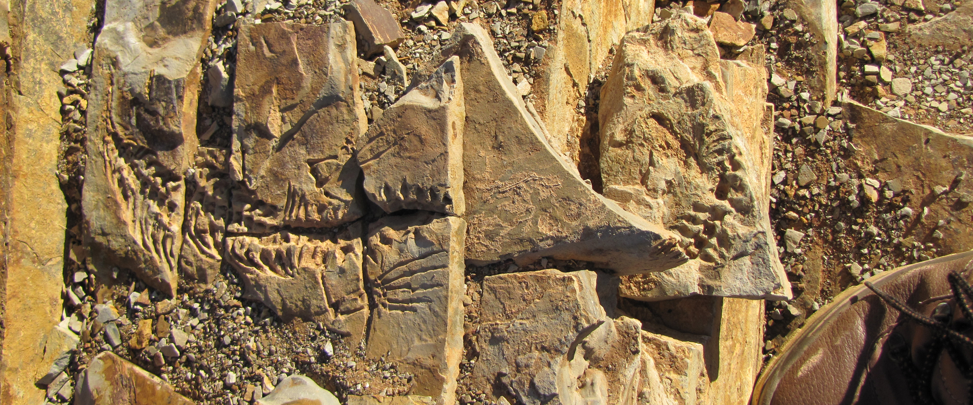 Facts On Dinosaurs And Other Fossils In Namibia Travel News Namibia