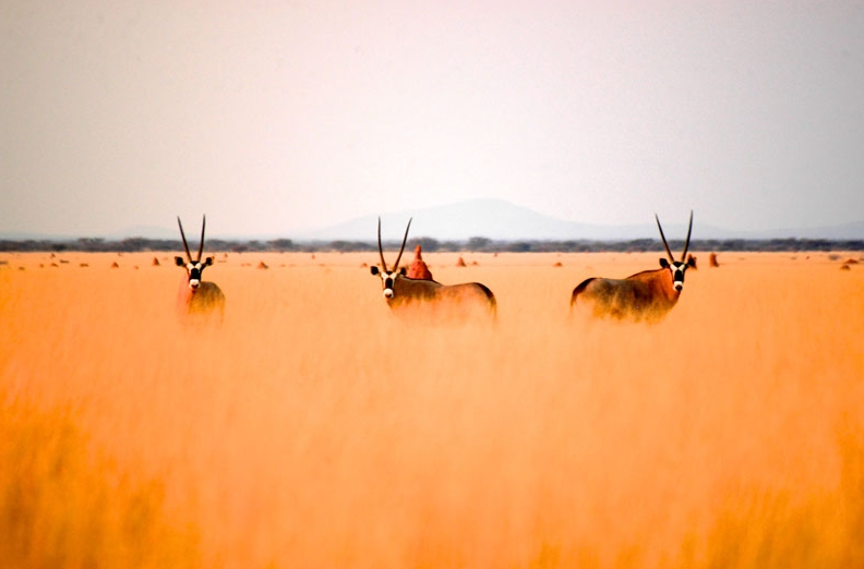 Namibia's magical colours. Photo ©Pack Safari.