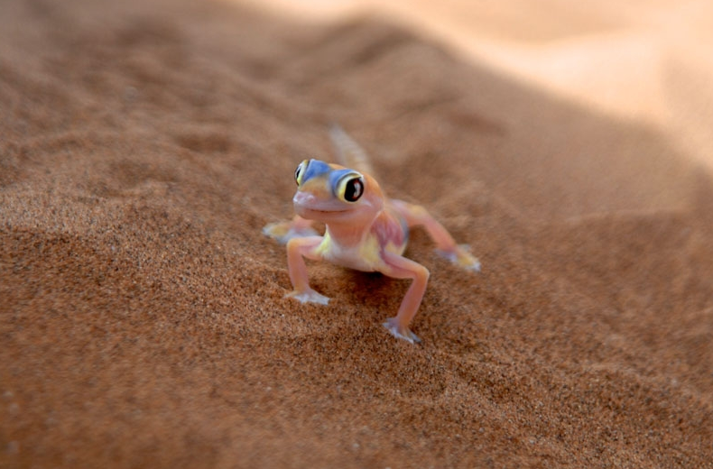 Tiny wildlife thrive in the Namib desert. Photo © Pack Safari.