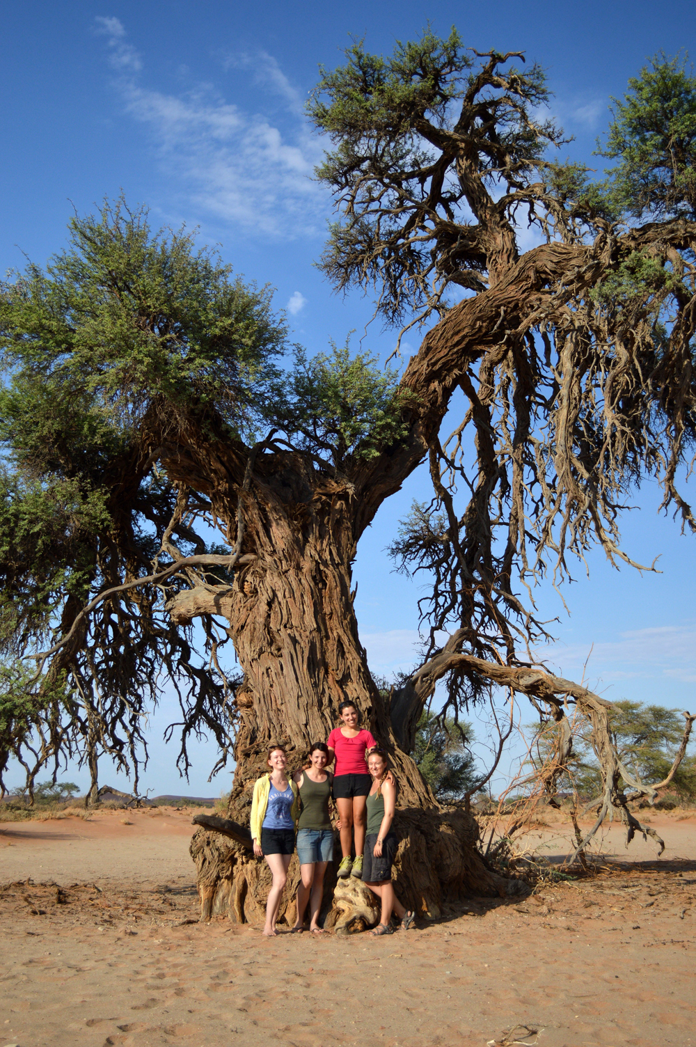 The-girly-team,-having-photo-shoot-at-a-very-old-and-big-camelthorn-tree