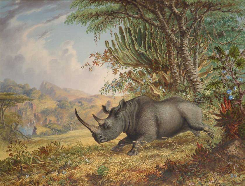 Thomas Baines (1820-1875), The Black Rhinoceros, Painted 1871, Oil on Canvas
