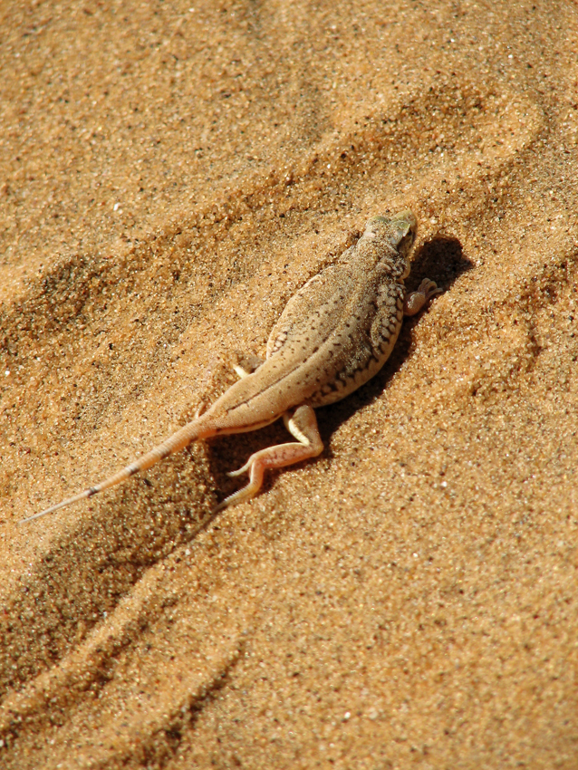 Gecko. Photo ©Ron Swilling