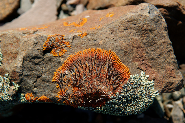 Lichen. Photo ©Paul van Schalkwyk