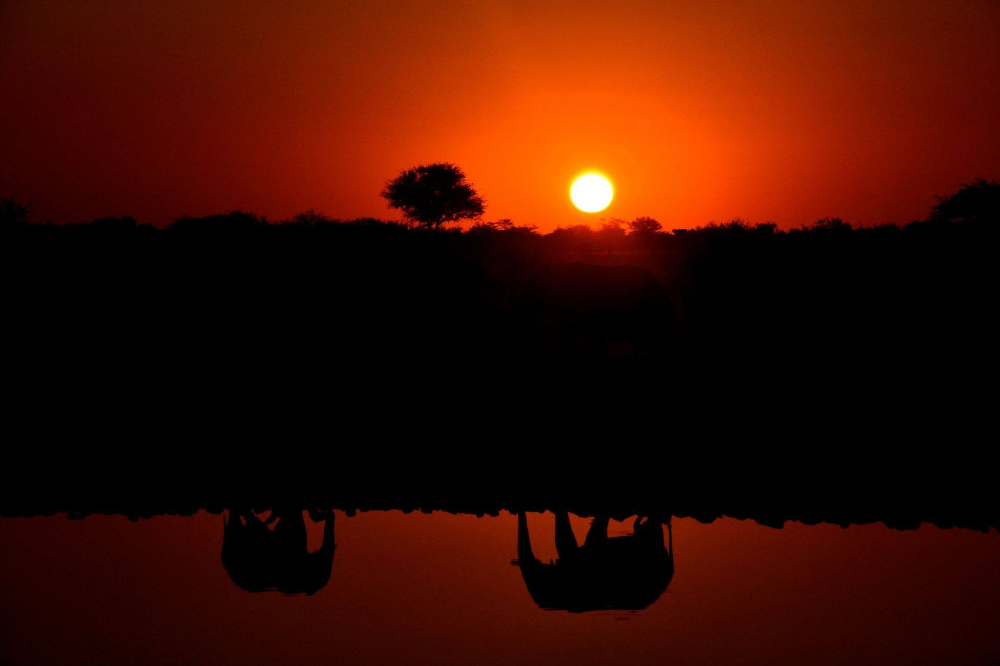 Etosah, Okaukuejo ... elephants at waterhole. @Thomas Blomme.