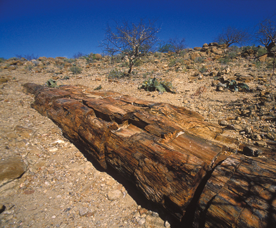 petrified-forest-pvs-photography
