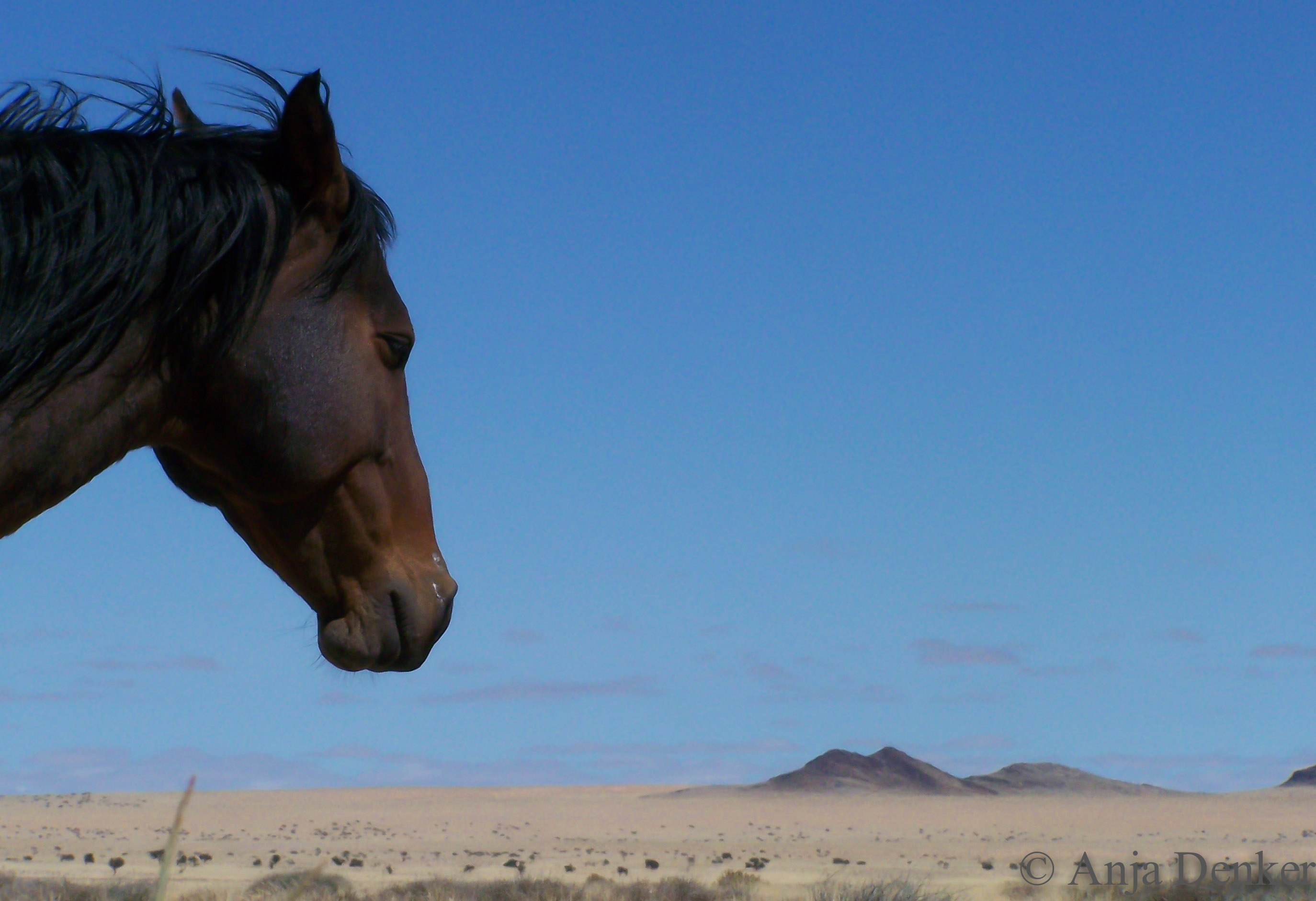 "Photo of wild horse, taken at Aus in 2008 with a ""little compact"".  ©Anja Denker"