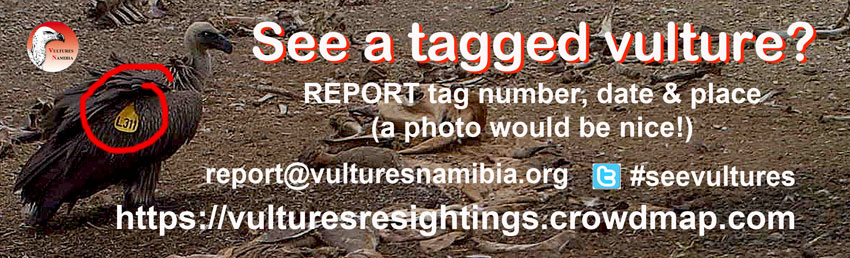Report your sighting of a tagged vulture
