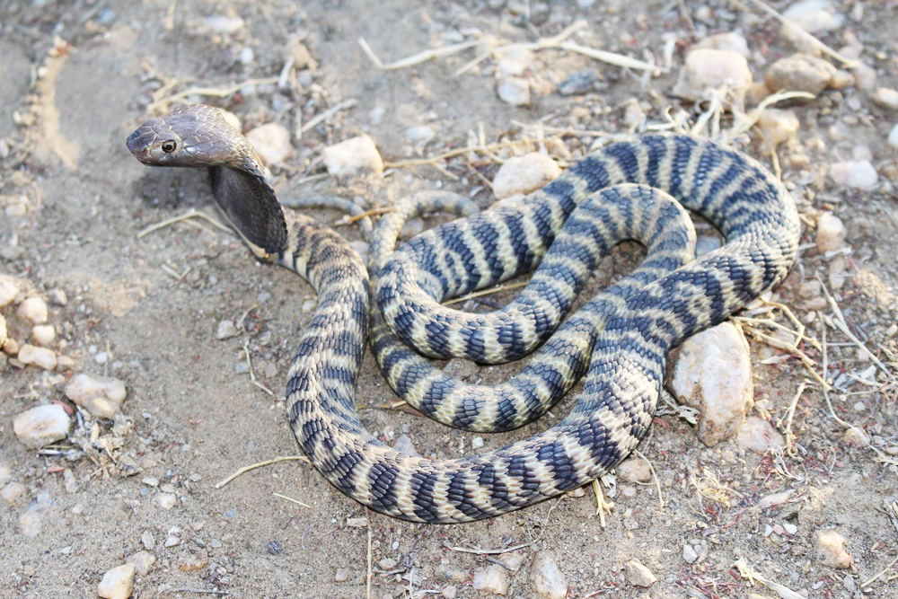 Guardians of the slithering ones - Travel News Namibia