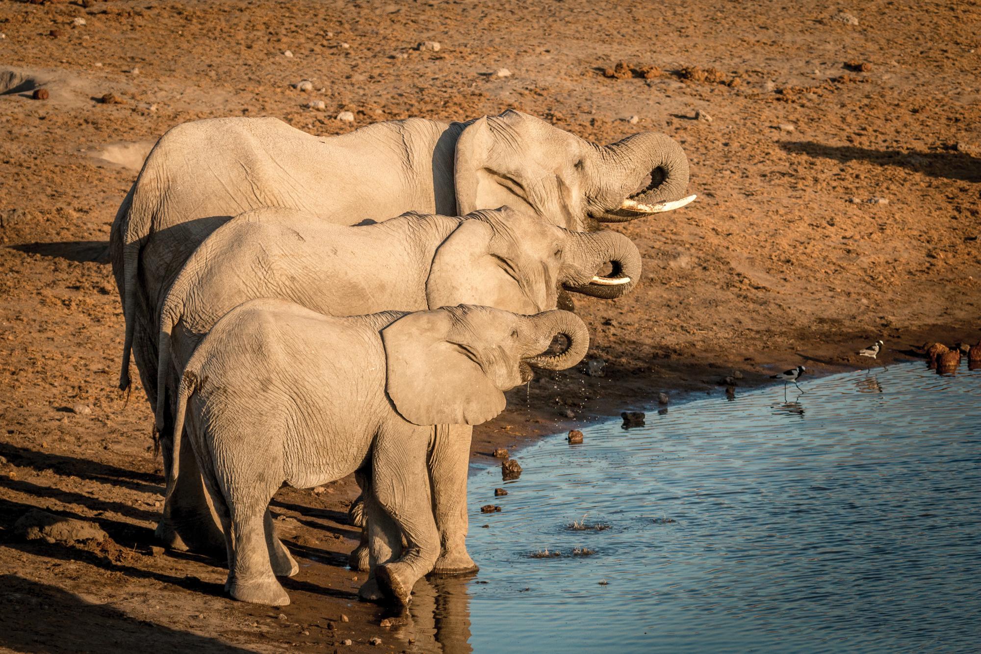 12.-Elephants-Drinking-Chudop