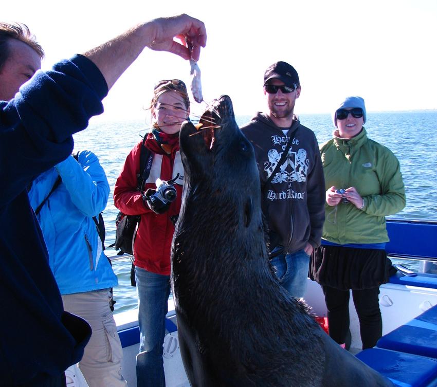 Swakopmund seal