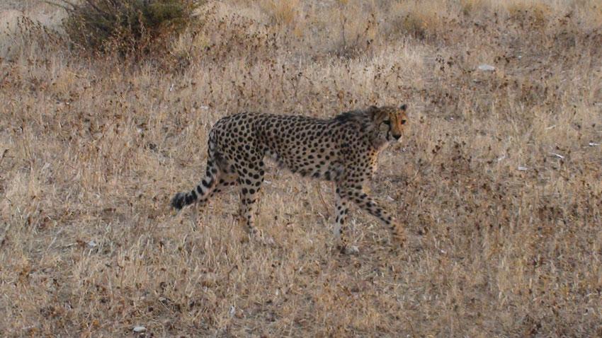 Otjitotongwe Cheetah Farm Safari Experience. Photo ©    Dalene Ingham-Brown
