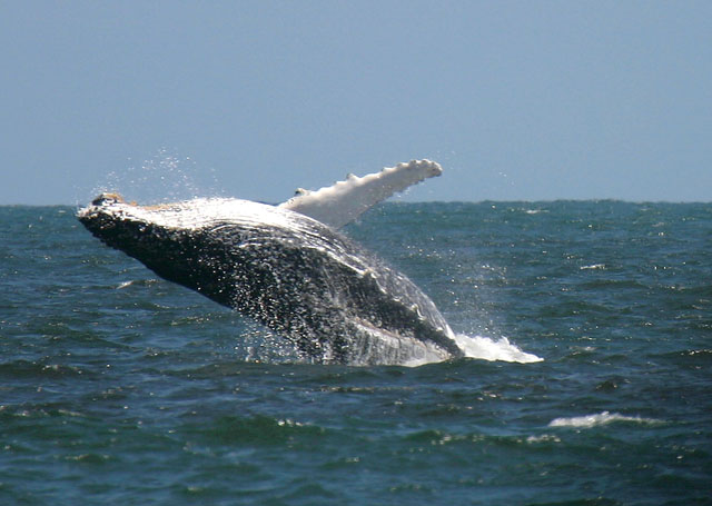 whale whales walvis bay