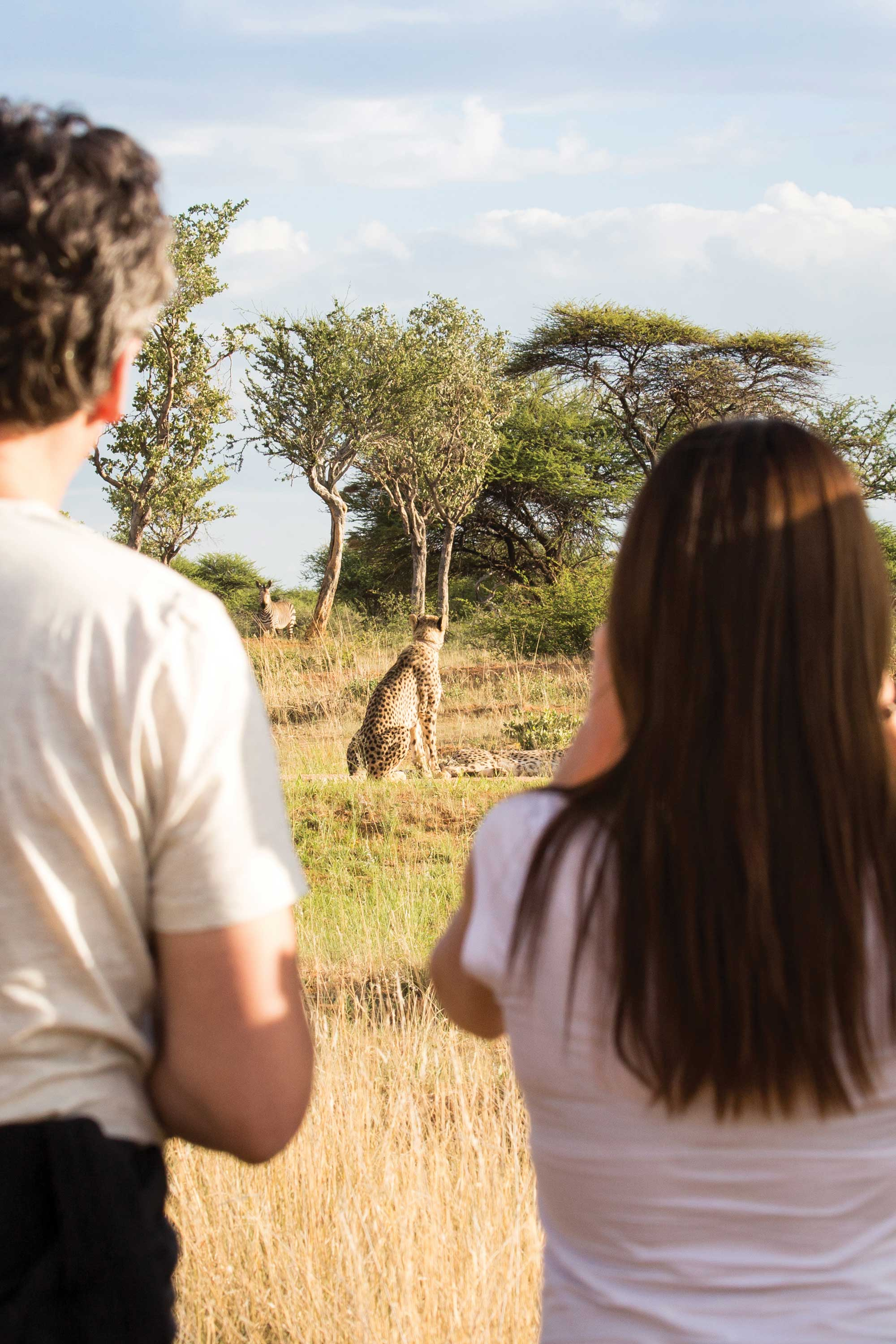Just-who-is-watching-who...-Cheetah-tracking-on-foot-at-Okonjima