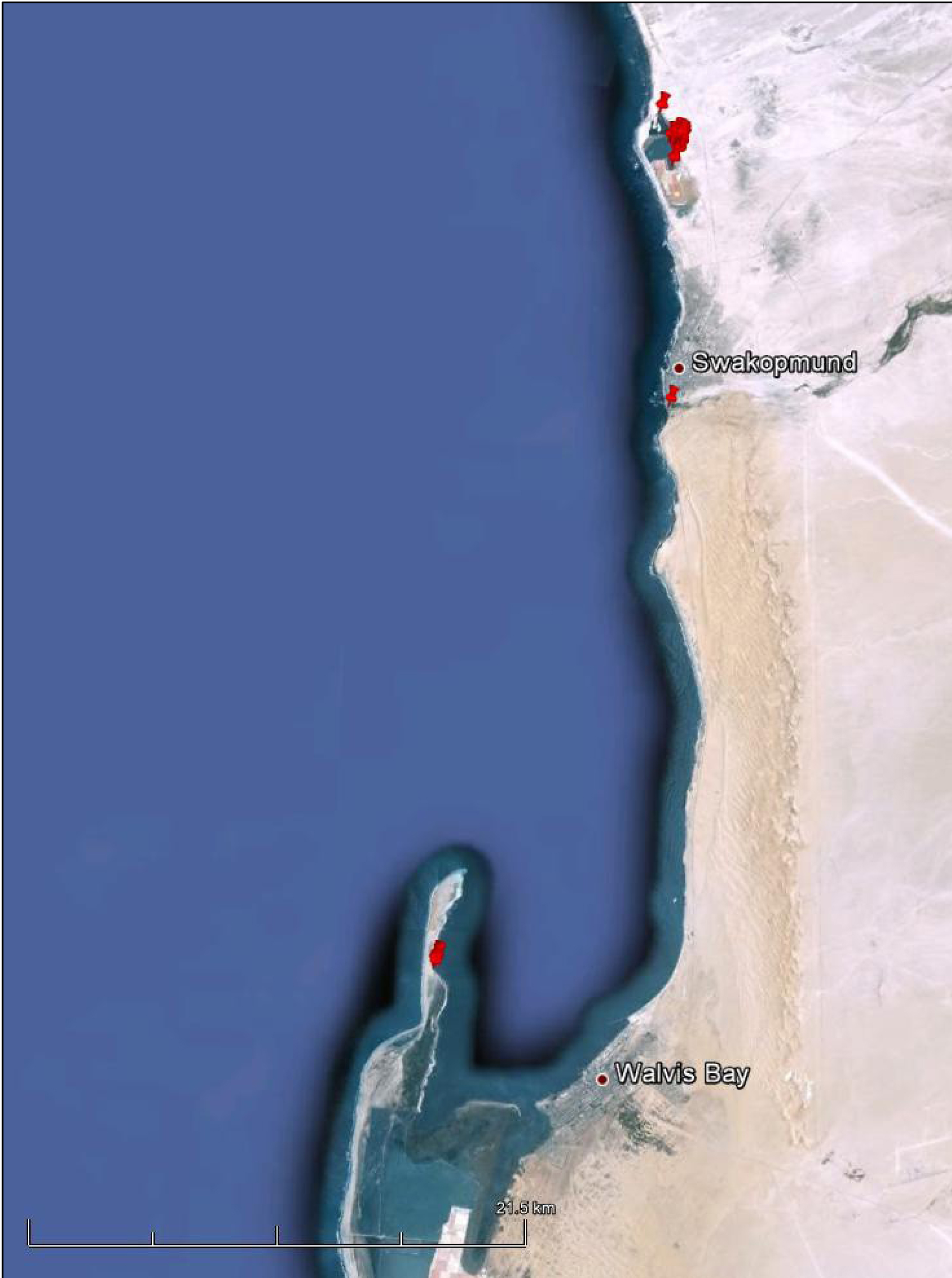 Localities (red markers) recorded for two Greater Flamingos (based on a Google map compiled by John Mendelsohn: Raison).