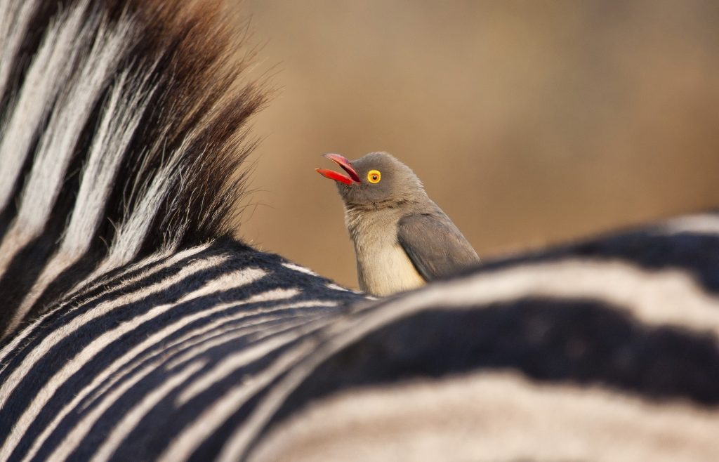 South West African Safaris