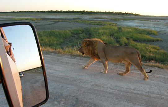 On safari in Namibia with Mabaruli African Safaris