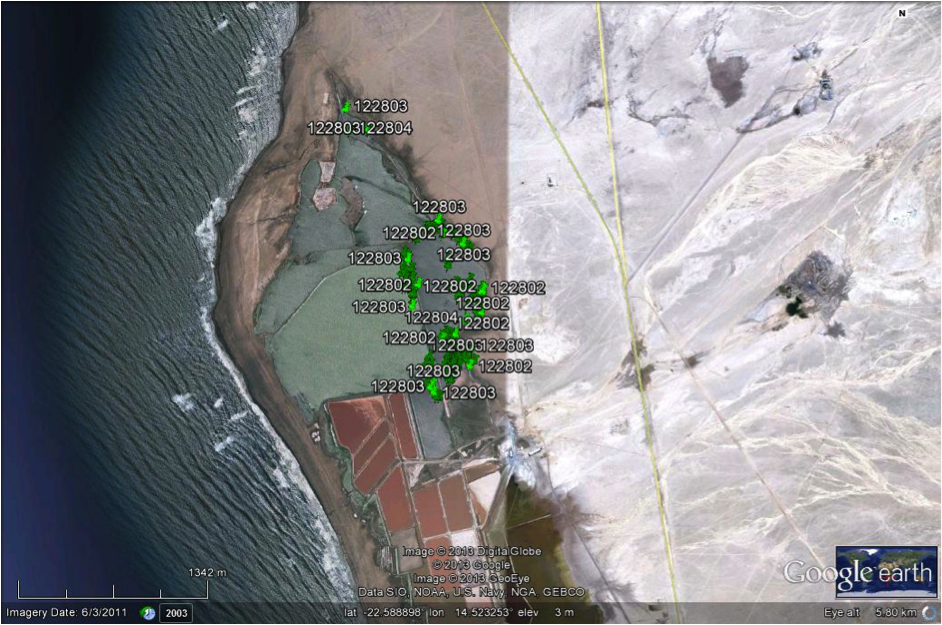Example of data obtained for three flamingos fitted with satellite tracking devices, showing their positions at Mile 4 Saltworks, Swakopmund (based on a Google map compiled by John Mendelsohn: Raison).