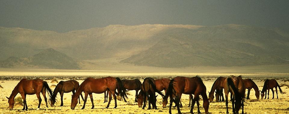 Wild Horses ©Gondwana Collection