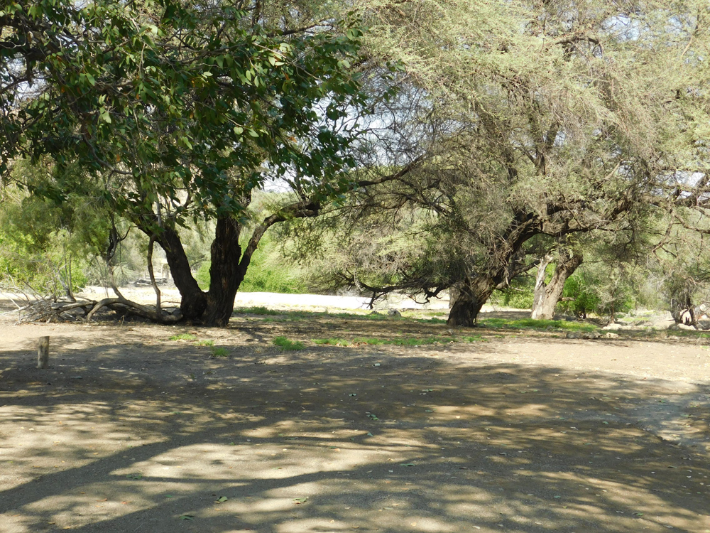 camel-top-campsite-outside-of-sesfontein