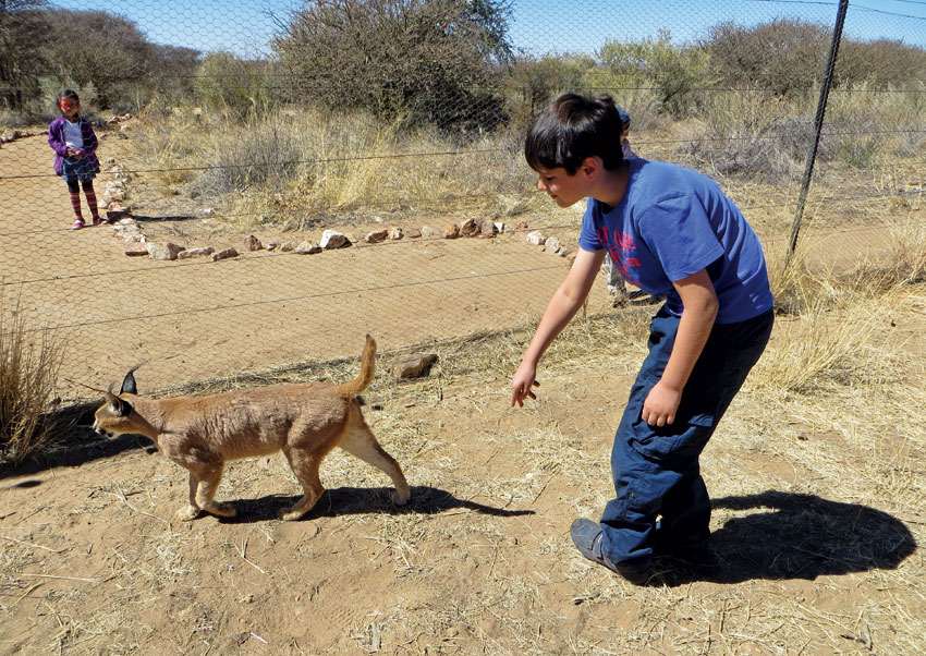 Up close and personal with a caracal at Naankuse