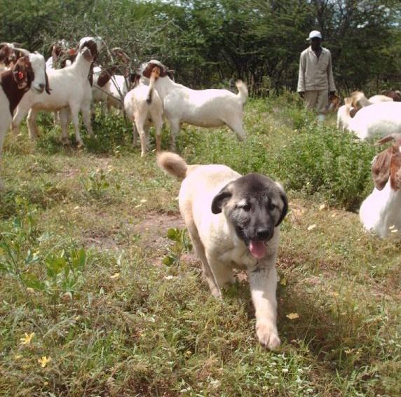 ccf puppies1