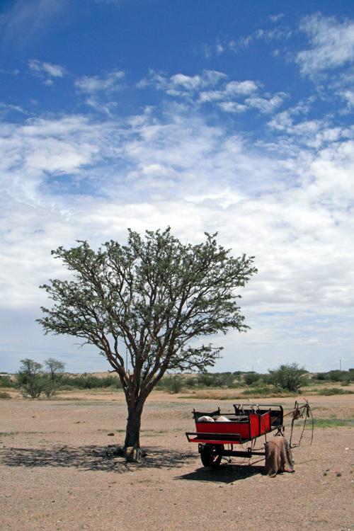 donkey-cart-under-tree keetmanshoop