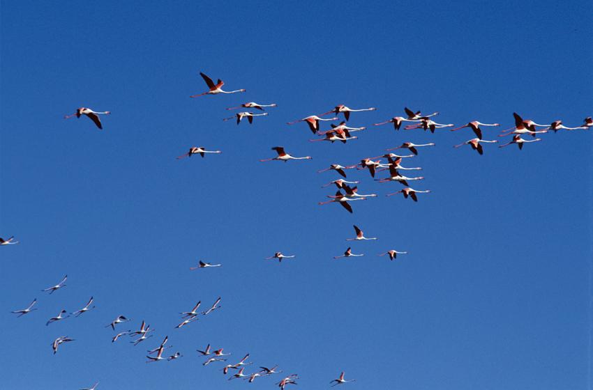 in-flight flamingos flamingo etosha pan hu berry