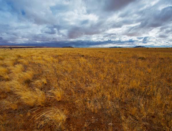 landscape 20080704_4889