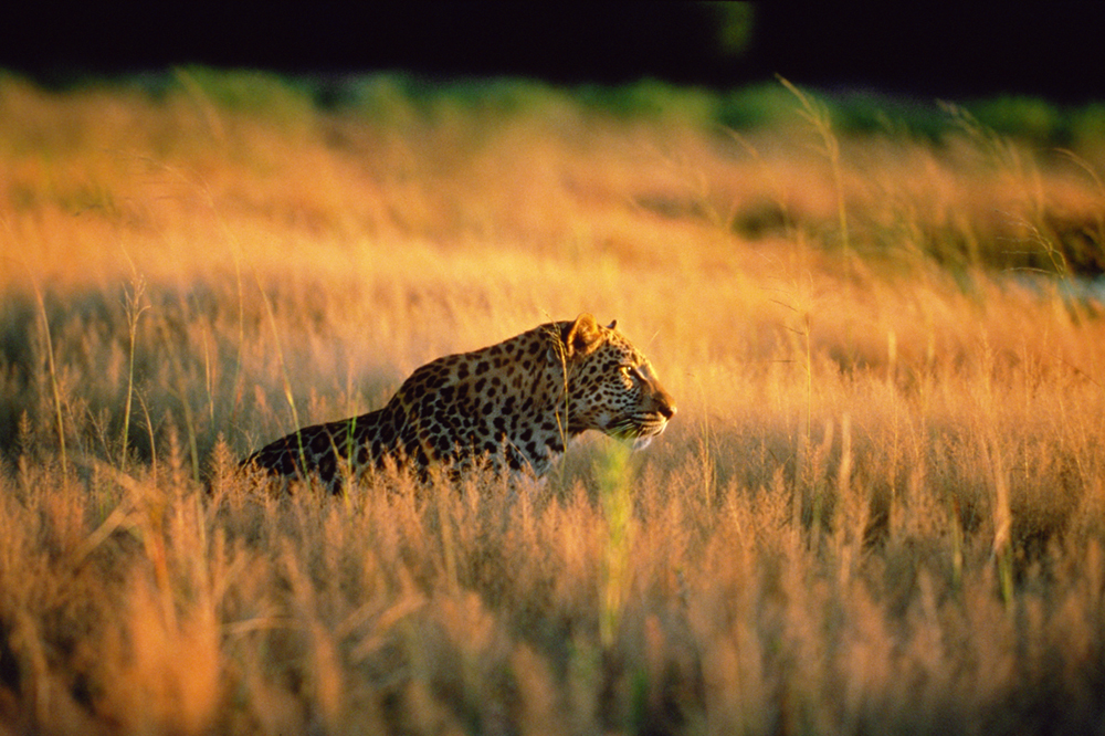 pic-of-leopard-(2)