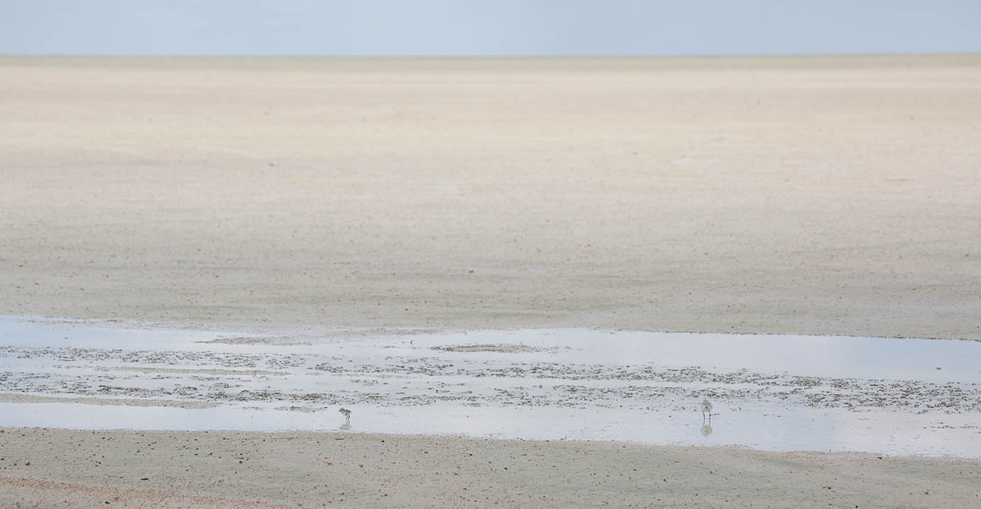 Etosha: plover and baby | Photo ©Annabelle Venter