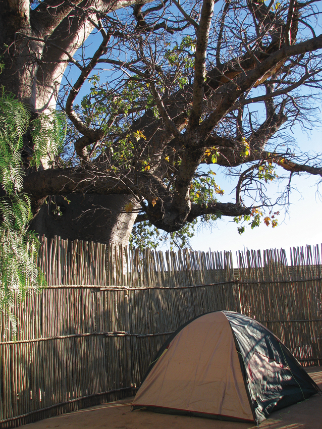 Camping underneath the baobab Photo ©Ron Swilling